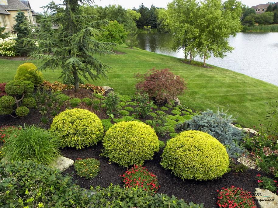 Ландшафтный дизайн растений фото